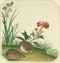 Quails and Flowers Victoria and Albert Museum Collection (D.1322-1889)