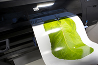 Printer printing an image of a leaf