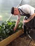 Chef picking vegetables at Foodshare allotment